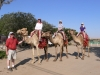 The camel ride