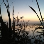Sunrise in the duck blind. Note the fog rolling in in the distance.