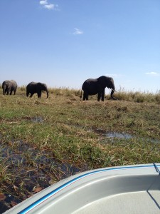 Elephant viewing by launch.