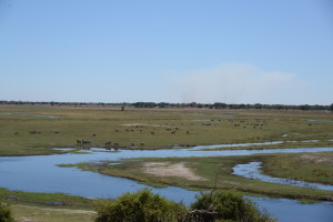 From the elevated position in Chobe it is easy to see all the wildlife on the Namibian flood plain.