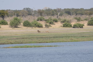 The lions were one of the few species that felt the need to move off as we got closer.