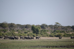 Lots of elephant.
