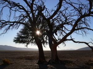 Sunrise in the Namib Desert