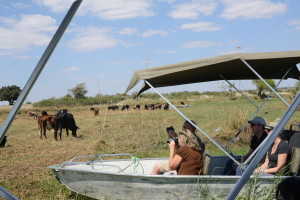 Tour boats and sundowner cruises had to be out of sight of the hunt and more importantly out of the line of fire.
