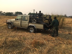 Johann uses a specially equipped truck allowing his staff to use the truck's winch to load the buffalo. Note the pulley on the push bar, another on the top of the roll bar, and a custom tailgate allowing the buffalo to be winched into the bed of the Land Cruiser.